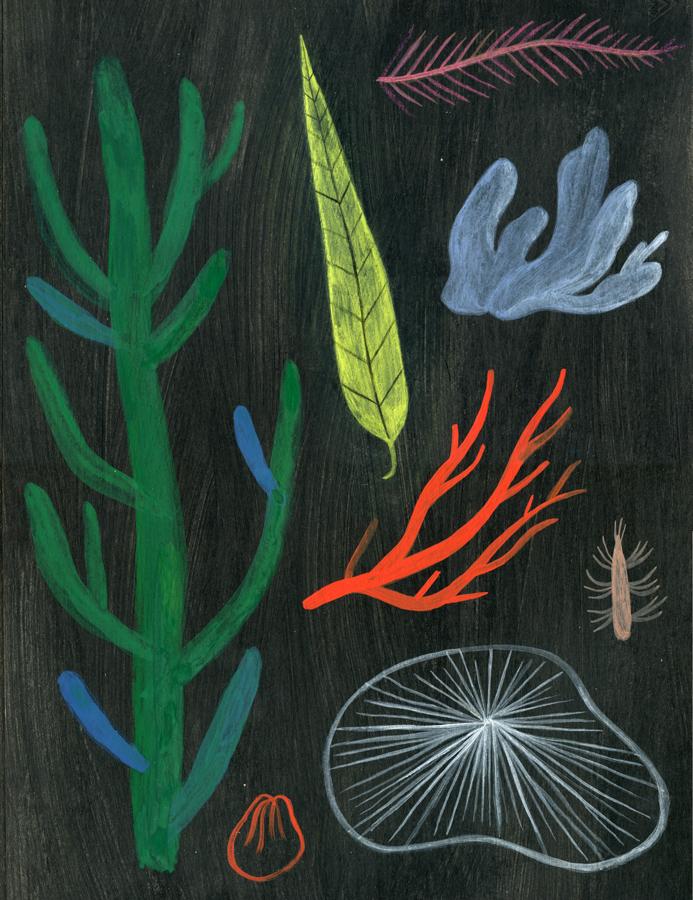 plantes-noir